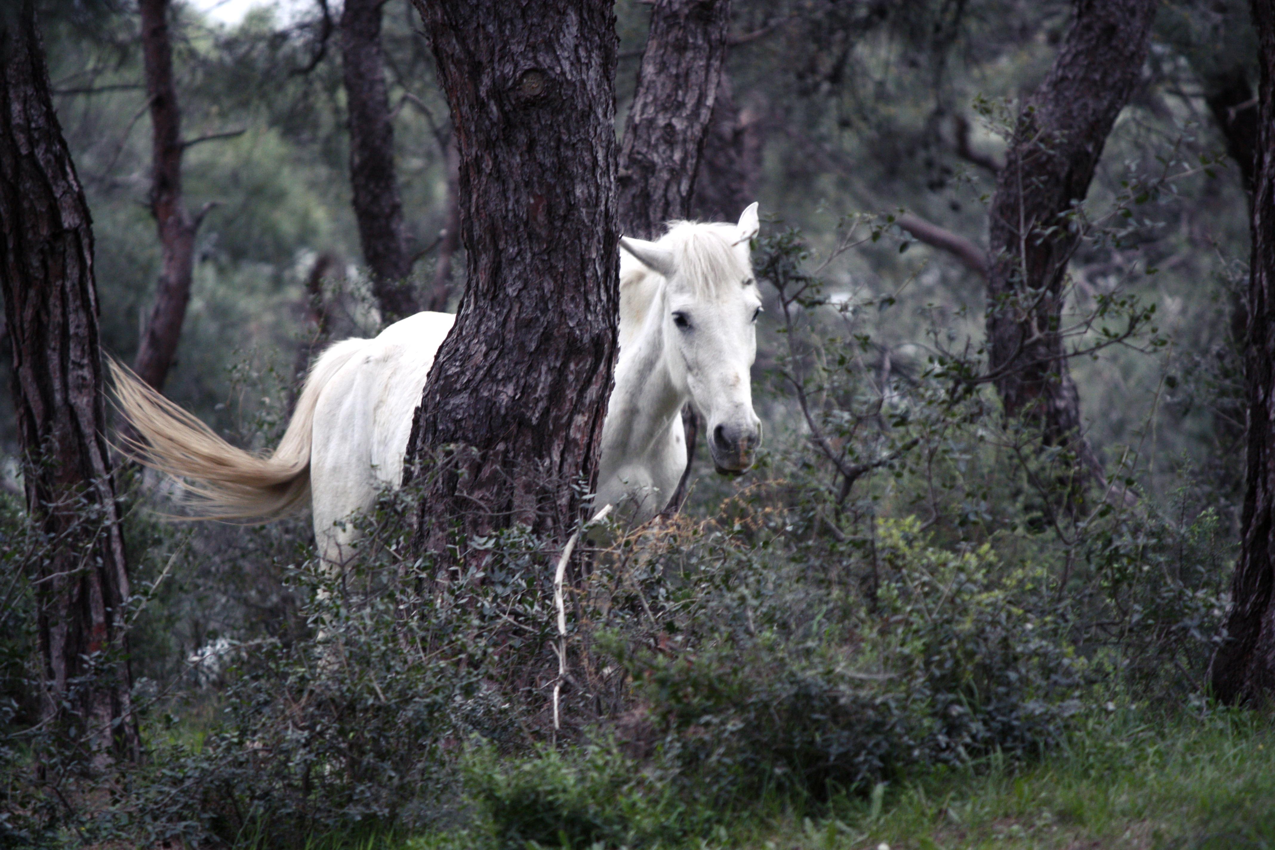 White mare.jpg