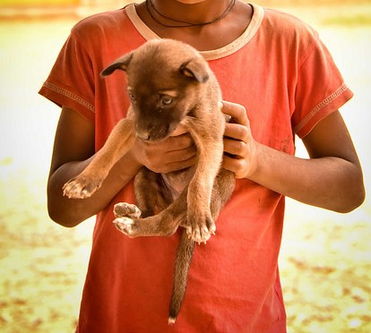 boy & puppy